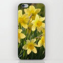 Yellow spring daffodil Photography iPhone Skin