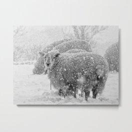 Sheep in the snow Metal Print