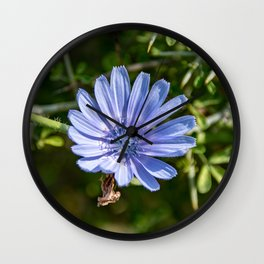 Chicory Flower Wall Clock