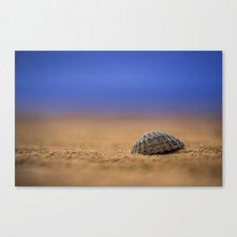 Seashell Canvas Print