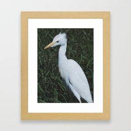 Wild Heron Framed Art Print
