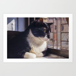 Cat Afternoon Art Print