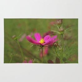 Floral Spotlight Rug