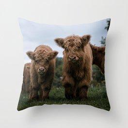 Scottish Highland Cattle Calves - Babies playing II Throw Pillow