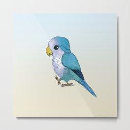 very cute blue quaker parrot Metal Print