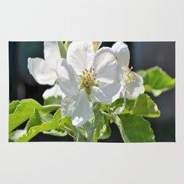 Apple tree in bloom Rug