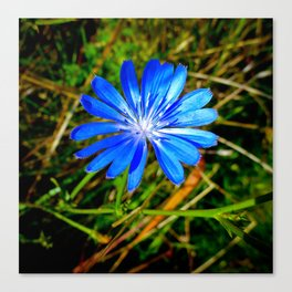 Field Flower (Blue) Canvas Print