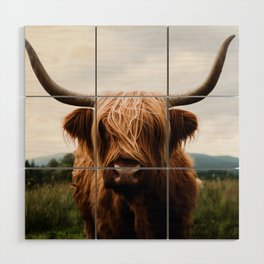 Scottish Highland Cattle in Scotland Portrait II Wood Wall Art