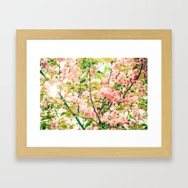 Spring Blossoms (1) Framed Art Print