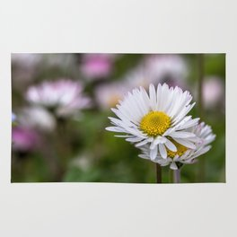 Colourful daisy field close up Rug