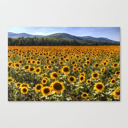 Sunflower Fields Of Dreams Canvas Print