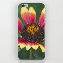 September flower iPhone Skin