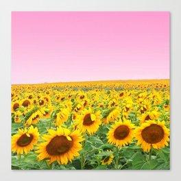 Blushing Sunflower Fields Canvas Print