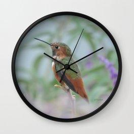 Allen's Hummingbird Sentinel Wall Clock