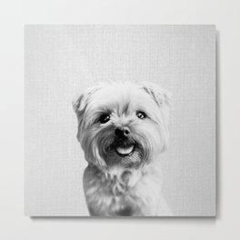 Dog - Black & White Metal Print