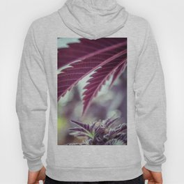Covered in Cannabis marijuana plant weed photograph Hoody