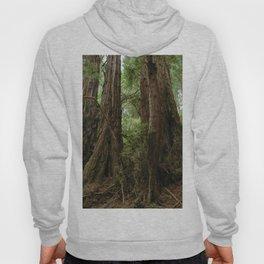 Muir Woods National Monument Hoody