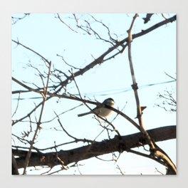 Isolated Little Chickadee Canvas Print