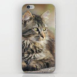 Cat Lying Down iPhone Skin