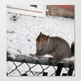 Curious squirel in the snow Canvas Print