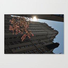 Peeking Sunlight Canvas Print