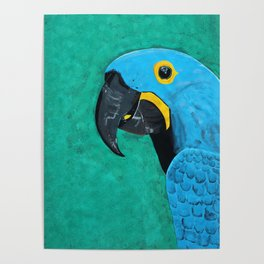 Hyacinth Macaw Gouache Painting Poster