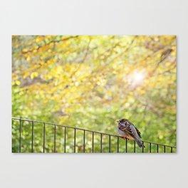 Bird, Central Park, New York City Canvas Print