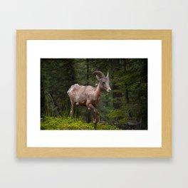 Banff Wildlife Framed Art Print