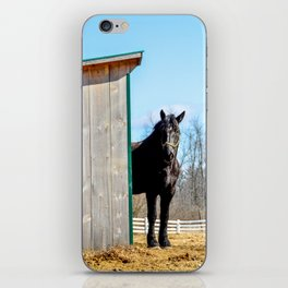 Percheron Horse by Teresa Thompson iPhone Skin