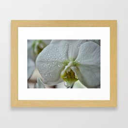 Pure Orchid Framed Art Print
