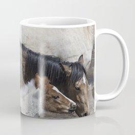 Pinto Foal Enjoying a Dip - South Steens Mustangs Coffee Mug