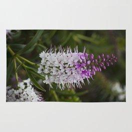 Hebe Lilac Rug