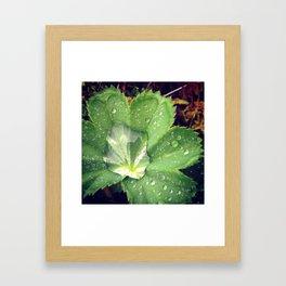Dew Leaf Iceland Framed Art Print
