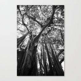 Black and White Banyan Canvas Print