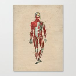 Human Muscle Anatomy 1841 Print Canvas Print
