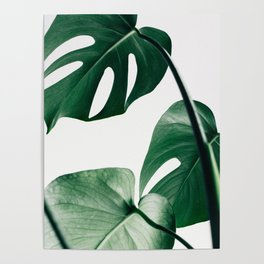 Plant, Green, Monstera, Leaf, Minimal, Trendy decor, Interior, Wall art, Photo Poster