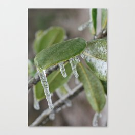 Icy Leaves Canvas Print
