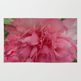 Rose Pink Peony by Teresa Thompson Rug