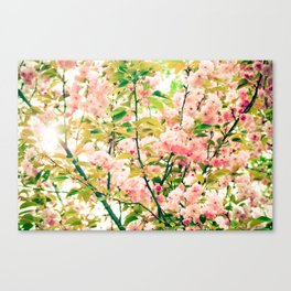 Spring Blossoms (1) Canvas Print