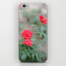 Church of Saint Anne's Gardens Blooms / Holy Land Fine Art Film Photography iPhone Skin