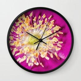 Beach Rose (Rosa rugosa) close up Wall Clock