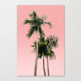 Palm Trees on Pink Wall Canvas Print