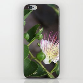 Capers Flower And Fruits iPhone Skin