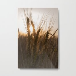 Wheat Holding the Sunset Metal Print