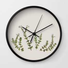 Crassula - String of buttons Wall Clock