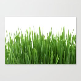 Long vertical green plants with white background Canvas Print
