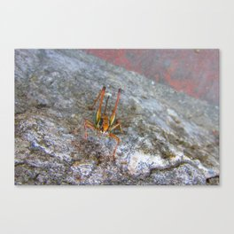 Garish Grasshopper Canvas Print