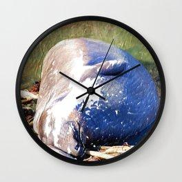 Napping Elephant Seal, San Simeon CA Wall Clock
