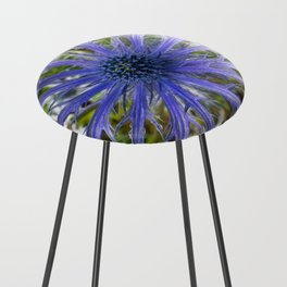 A thistle with style Counter Stool