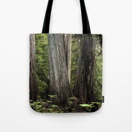 Ancient Cedar Forest Tote Bag